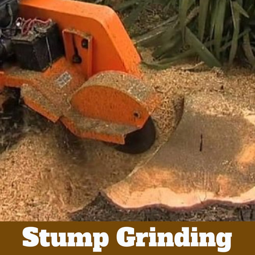 Stump being ground to dust